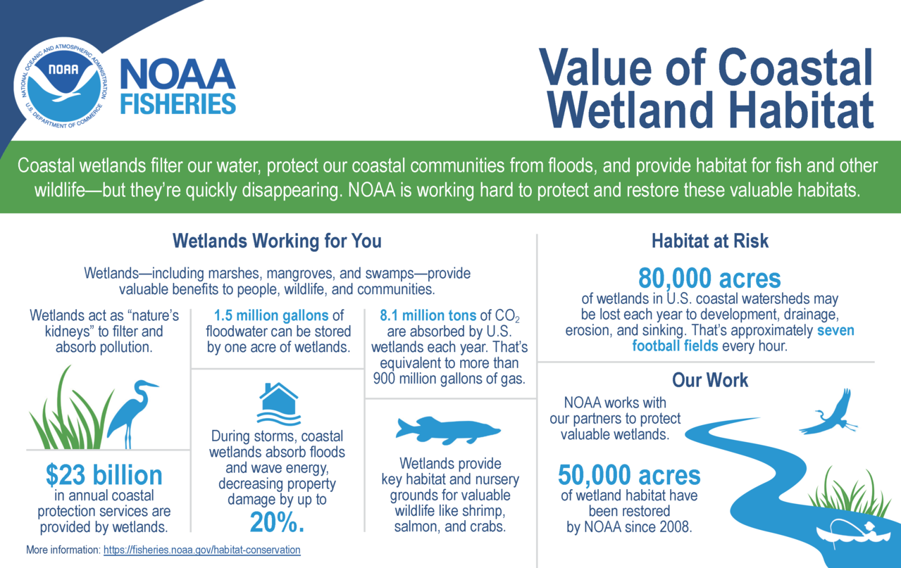 Value of Coastal Wetland Habitat infographic
