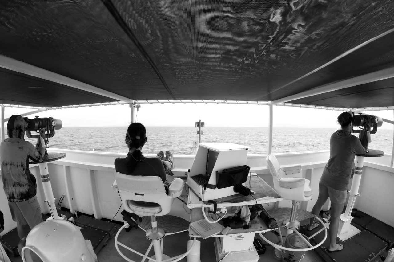 While on-effort, three visual observers continuously search for cetaceans: two search using big-eye binoculars, and one uses the naked eye and hand-held binoculars and enters data as needed.