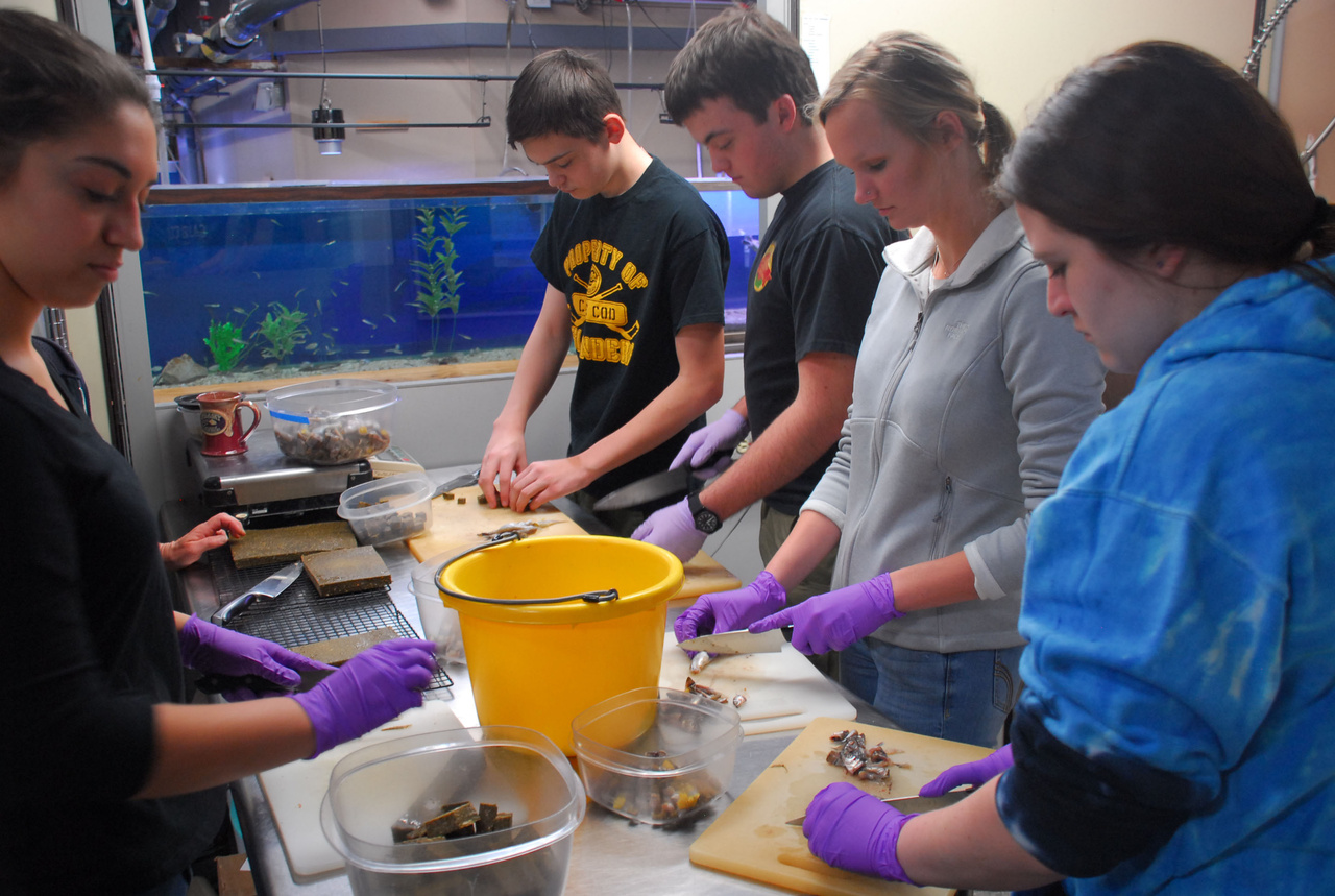 Students working with specimens at the aquarium
