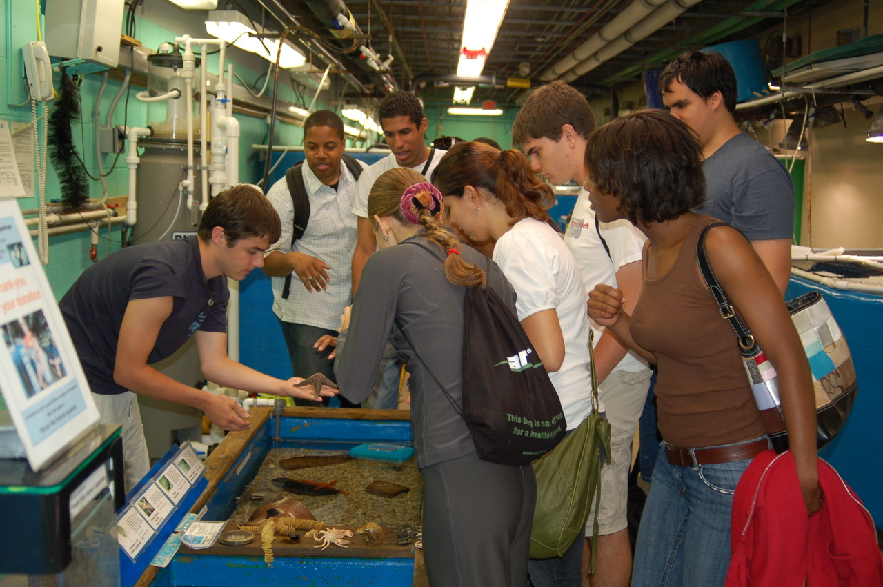 Describing the inhabitants of the touch tank to visitors.