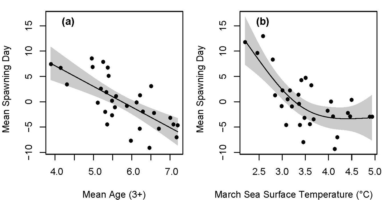 As age of the spawning population increases, spawning begins earlier (a). Warmer temperatures mean earlier spawning to a point around 4 ℃; above that temperature, spawning time levels out (b).