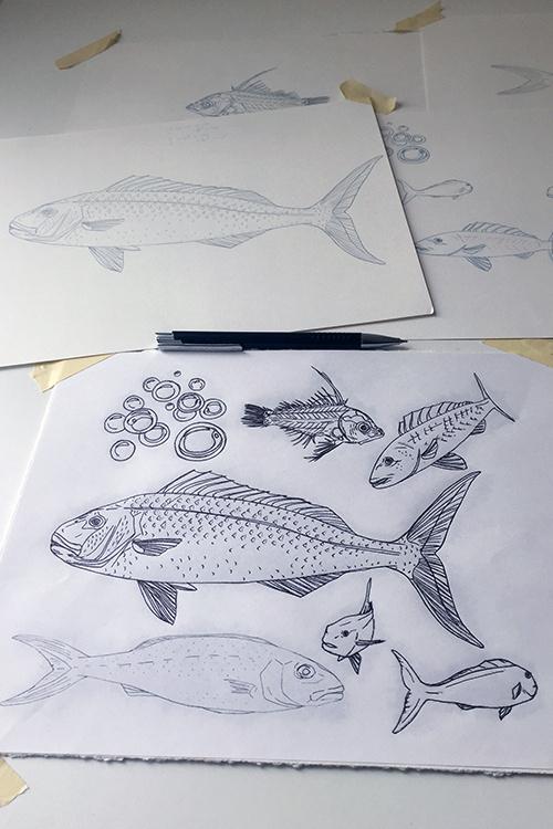 750x500-aprion-virescens-uku-sketches-rachel-strader.jpg
