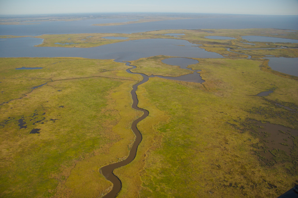 Aerial view of coastal Louisiana wetland