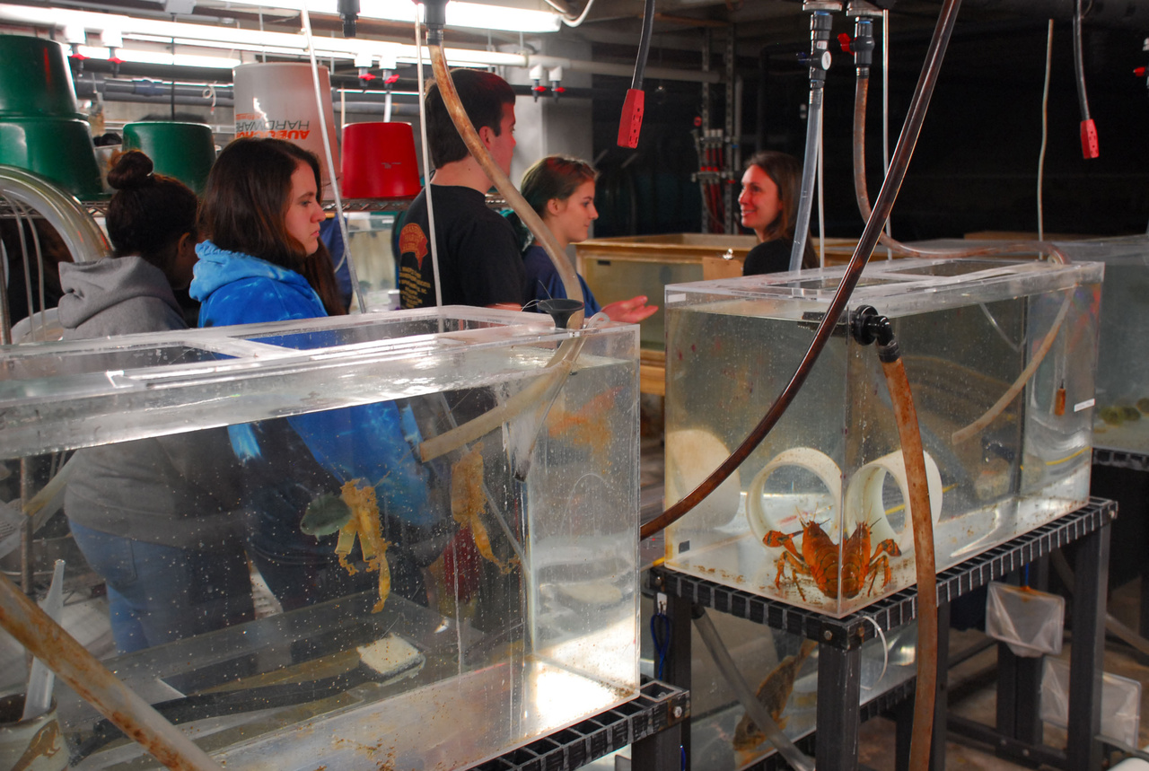 Students viewing research tanks in aquarium.