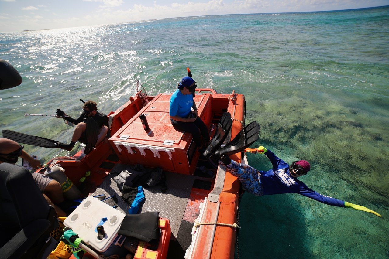 Team Members Noah Pomeroy, Kerry Reardon, and Jenni Samson jump in to conduct a snorkel bleaching survey at Kānemilohaʻi/Lalo/Mokupāpapa (also known as French Frigate Shoals). <i>Photo: NOAA Fisheries/James Morioka. </i>