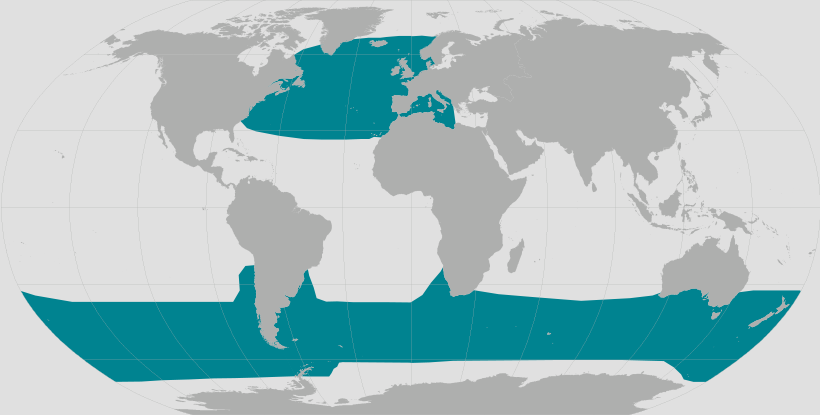 Long-finned Pilot Whale Range map