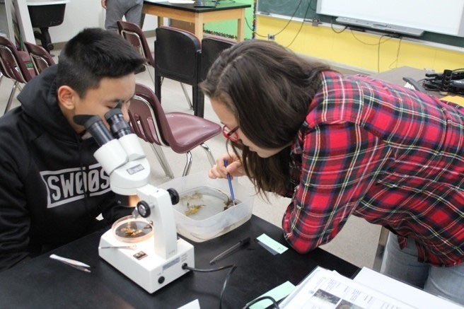 Students looking at invertebrates under the microscope
