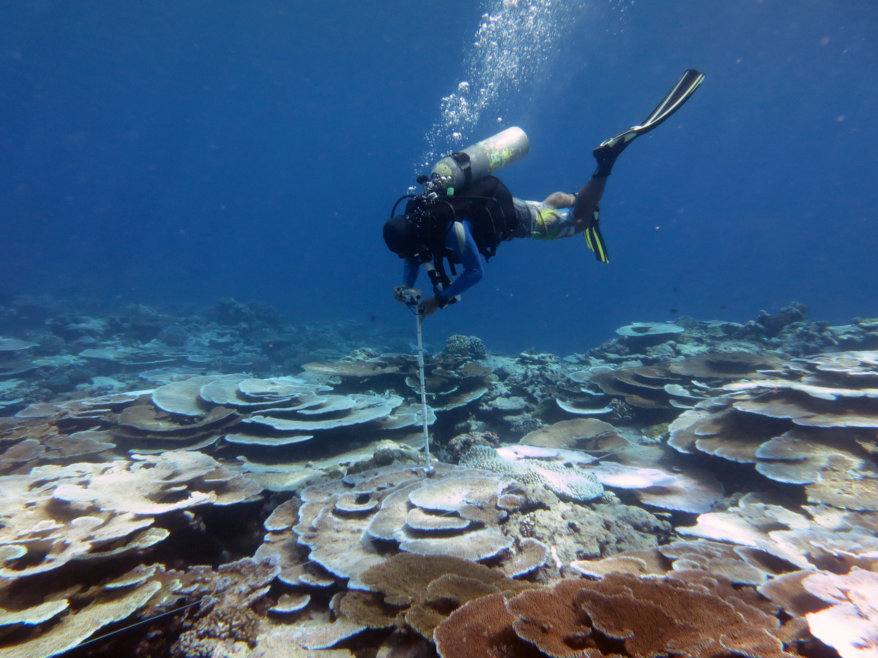 Diver conducts survey of bleached corals at Tutuila Island in American Samoa.