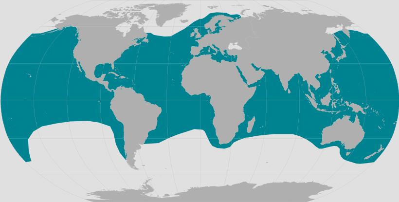 Leatherback turtle range map.