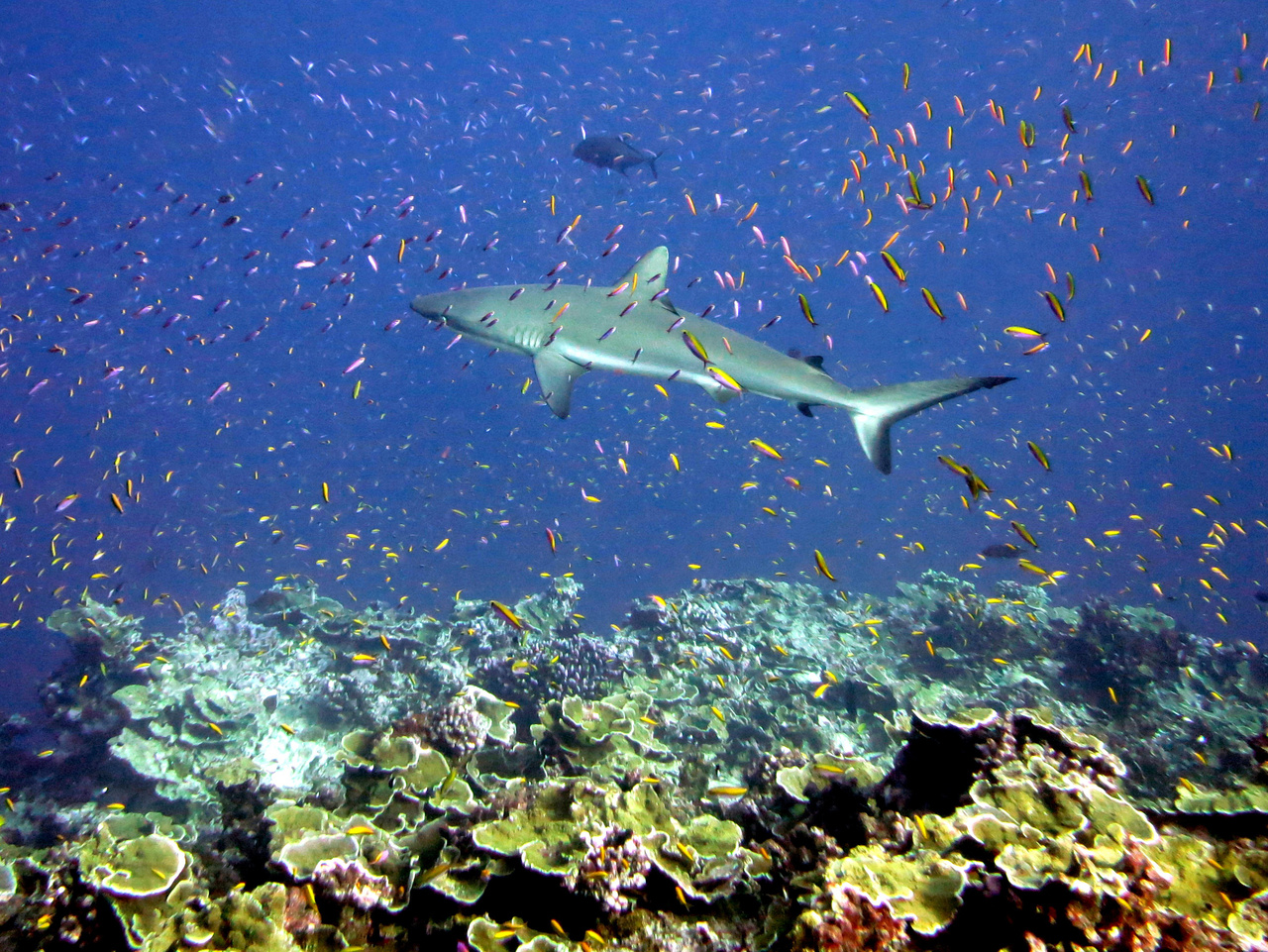 human impact on coral reefs