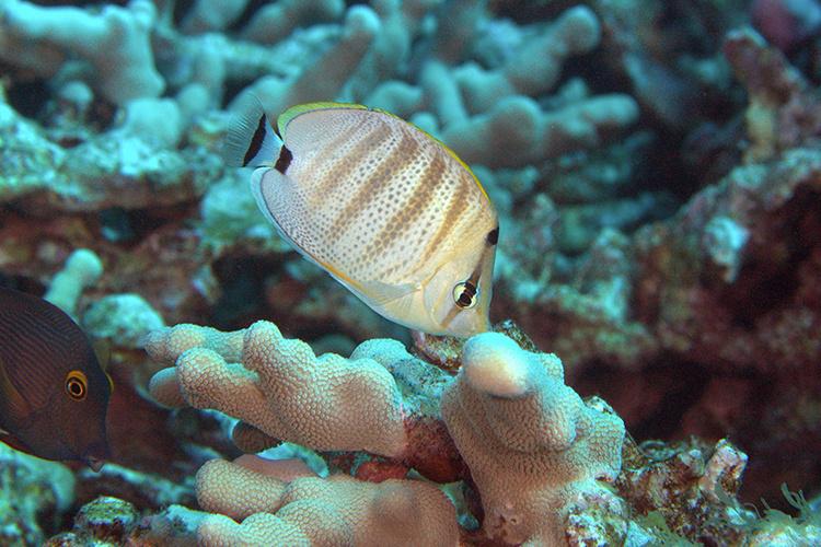 Fish near coral.