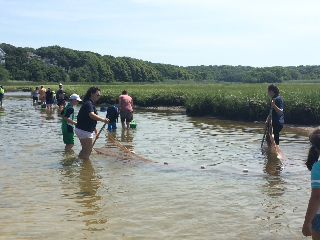 Group of people on a collecting walk in a marsh with nets and pails