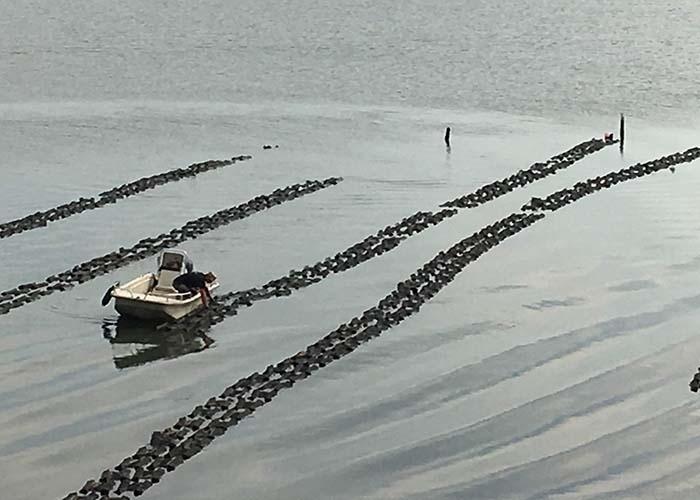 700x500bagged_oysters.jpg