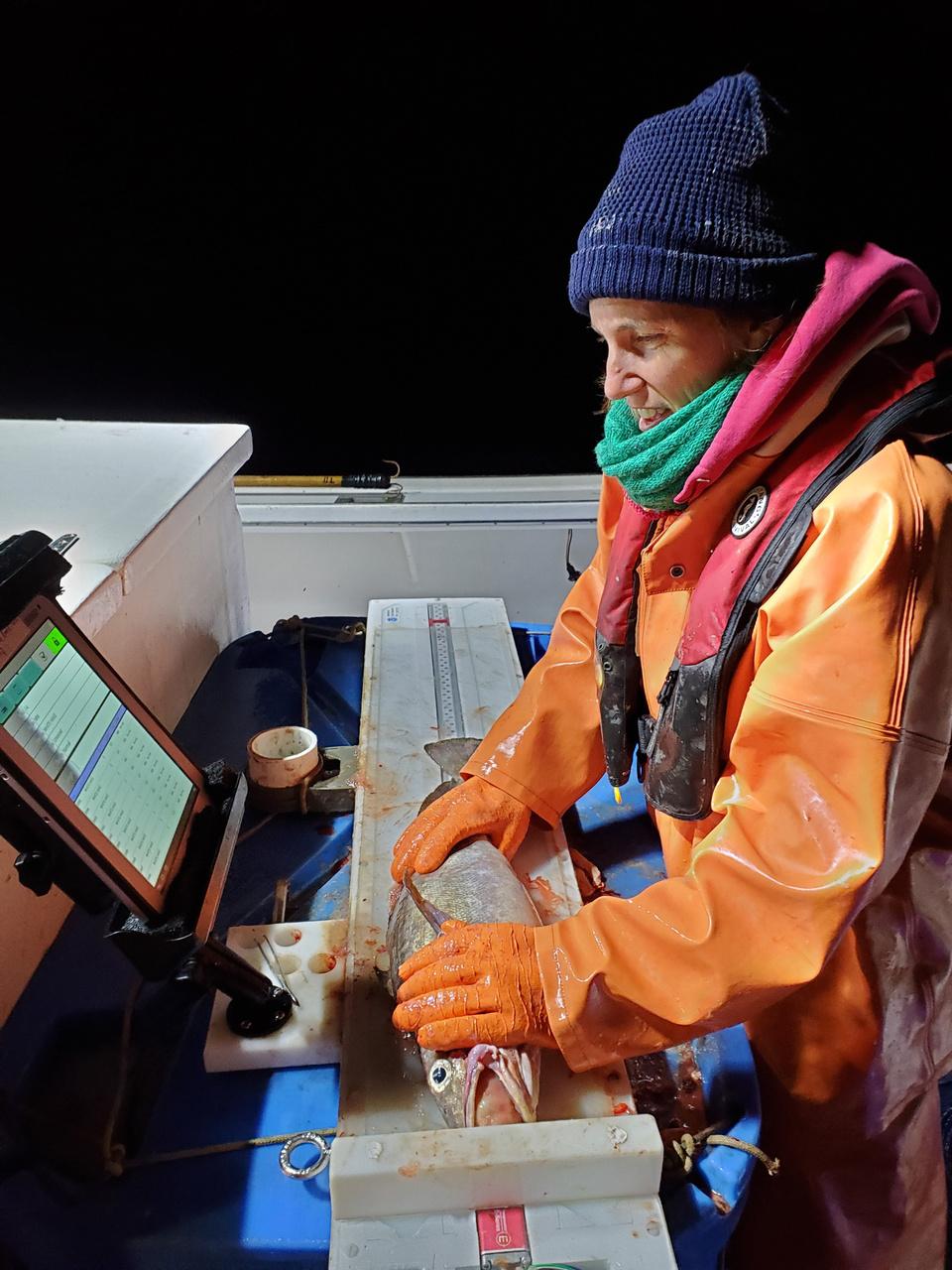 sampling hake at a computerized work station at sea at night