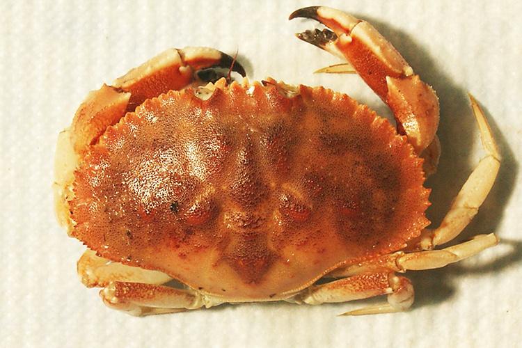 750x500-jonah_crab1_fullsize-edit.jpg