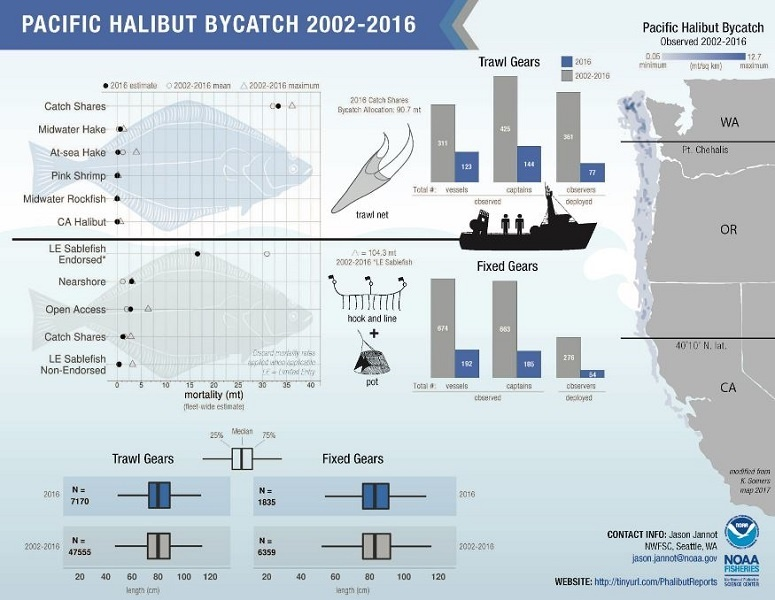 infographic on Pacific Halibut Bycatch in U.S. West Coast Fisheries (2002-2016)