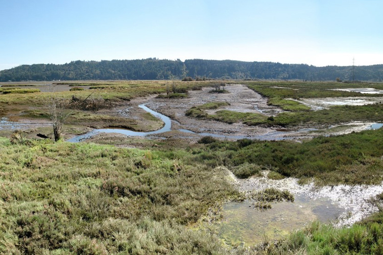 A flat landscape with short marsh grasses and a small stream running through