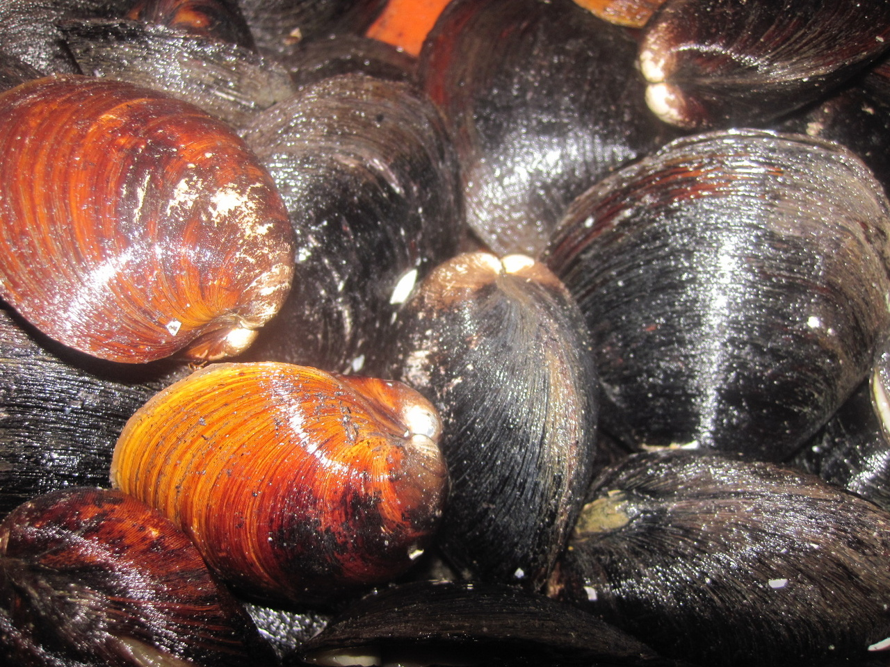 Close-up of clams.