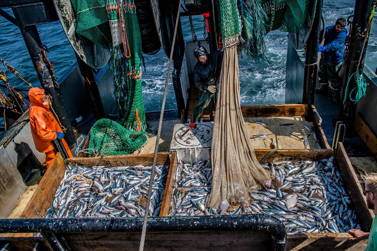 Catch from each of two trawl nets unloaded into separate boxes on the deck of a fishing vessel