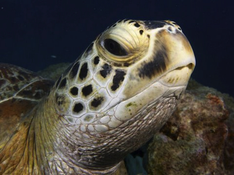 A close-up of a green turtle's head.