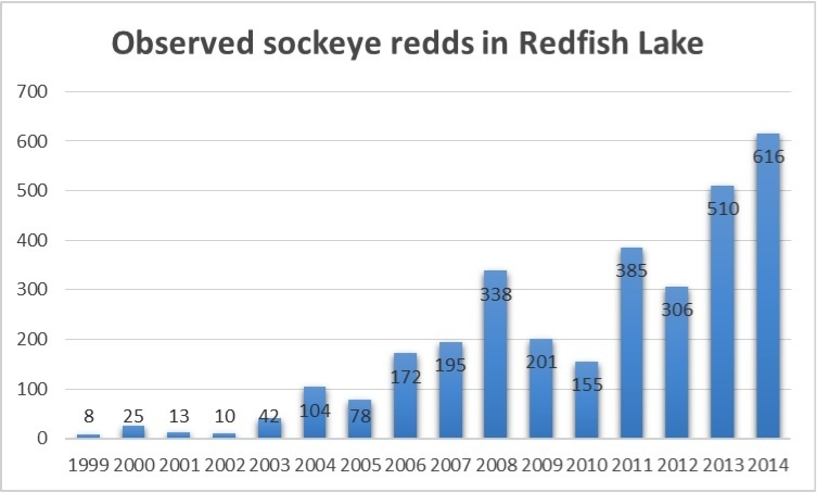 graph showing observed sockeye salmon redds in Redfish Lake from 1999 to present