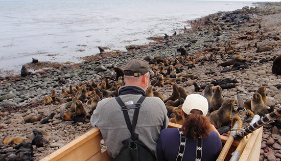 Researchers Jeremy Sterling (left) and Carey Kuhn (right) observing northern fur seals at Vostotchni rookery., Photo by John Skinner