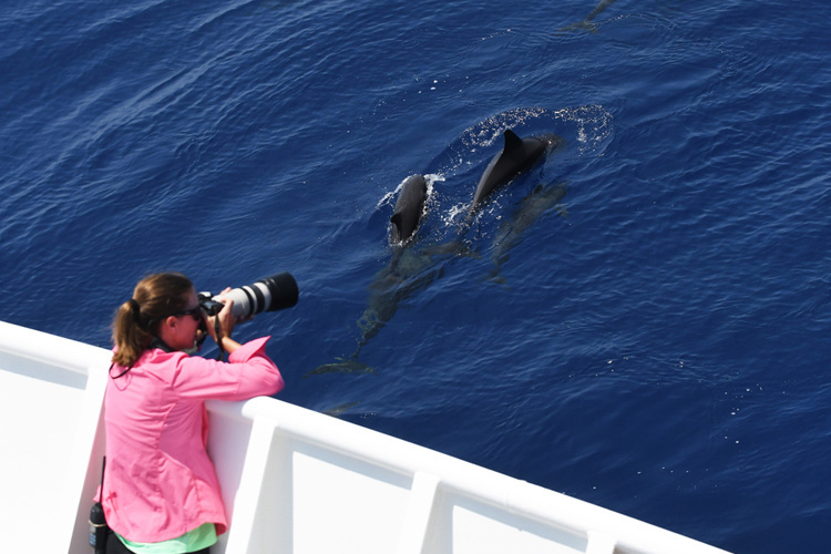 750x500-researcher-photographs-melon-headed-whales.jpg