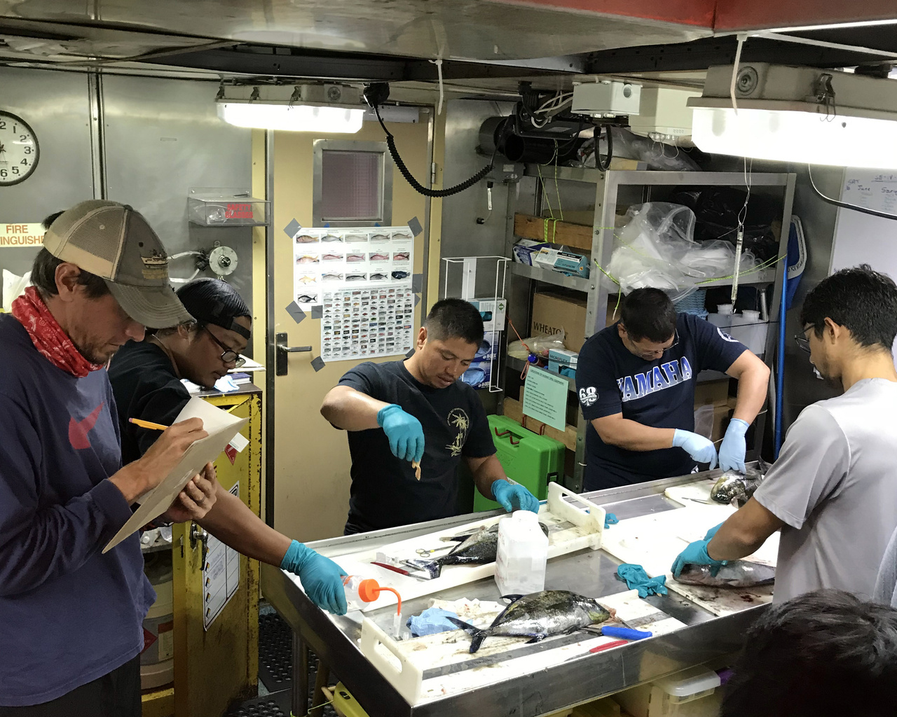Researchers conduct fish sampling aboard the NOAA Ship Sette