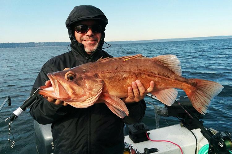 Fisherman shows fished bocaccio.