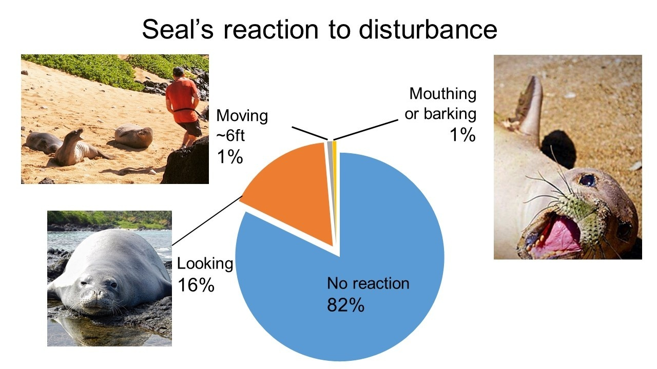 Pie chart showing 82% no reaction, 16% looking reaction, 1% moving reaction and 1% mouthing or barking reaction.