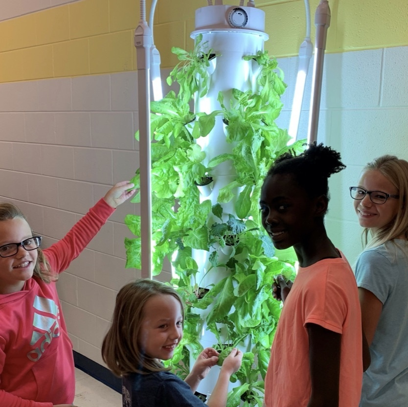 Children looking at plant