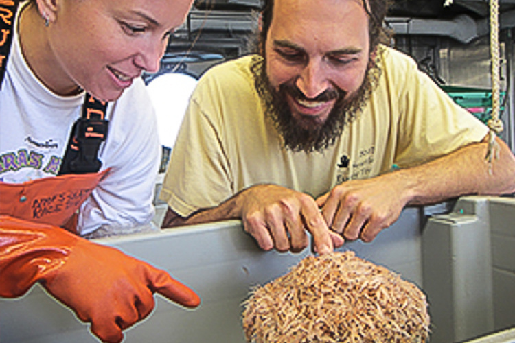 Krill, Alaska, NOAA Scientists