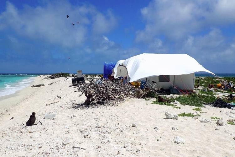 Field camp and canvas tent on East Island.