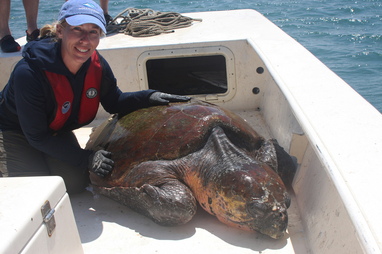 Biologist on boat with sea turtle