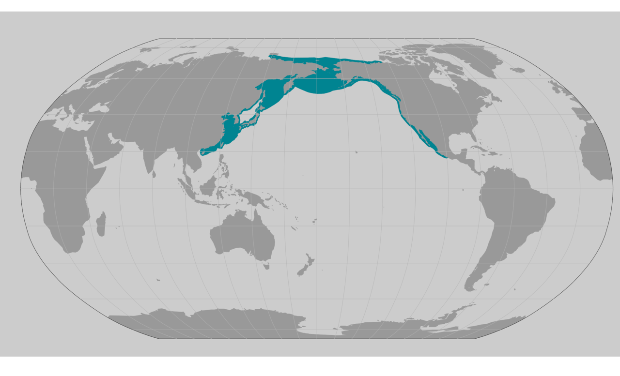 GrayWhale_UpdatedWebMap_7.17.2020.png