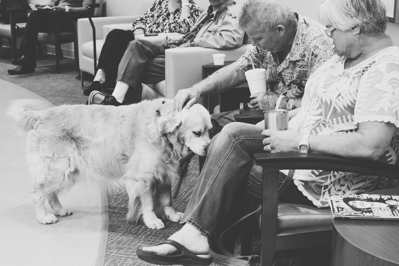 Therapy dogs bring families and patients at West Cancer Center much-needed distraction, as well as other benefits.