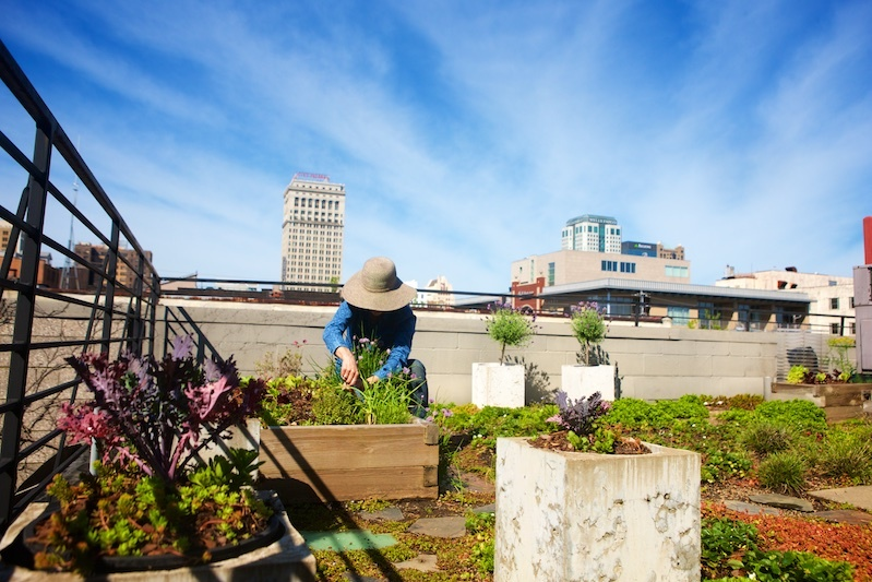 """I love to be up here,"" says Ellen of her roof top haven, where she grows strawberries, lettuce, arugula, sorel, kale, tomatoes, squash, chives, parsley, rosemary, sage, garlic, thyme, tarragon, basil and dill, among other vegetables and herbs."