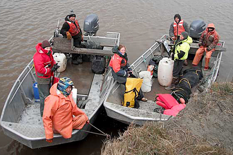 Yukon River Salmon Survey