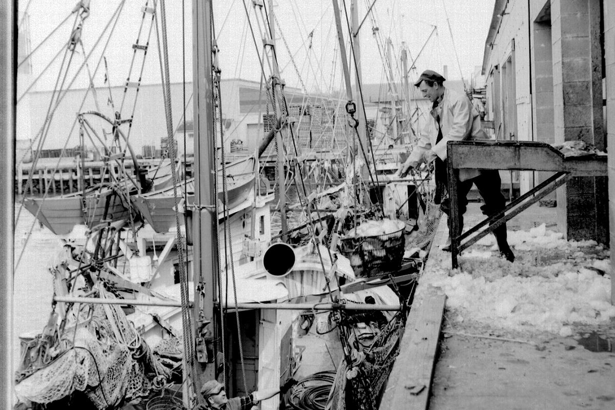 Men unloading fish from boat at pier