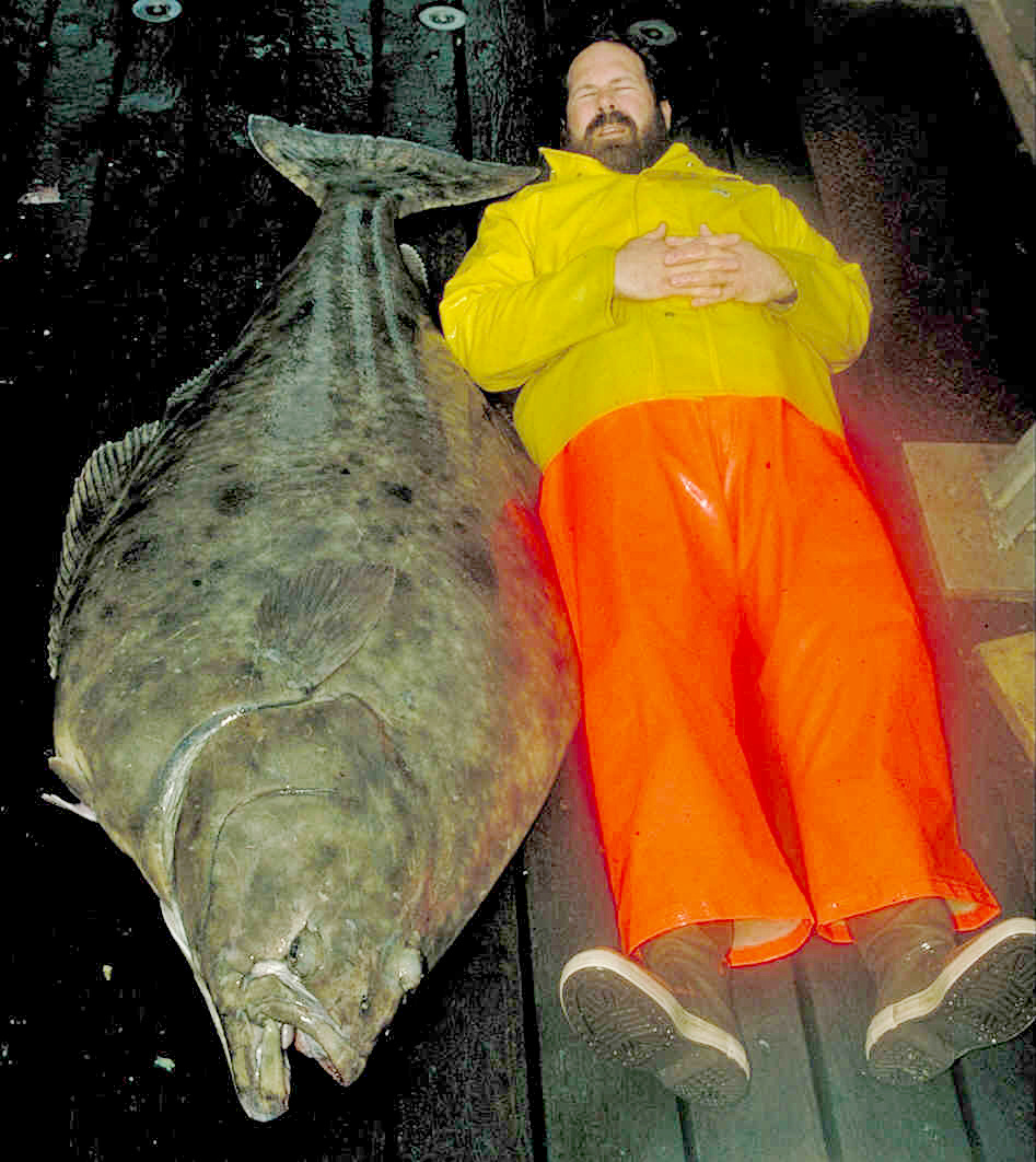 An Alaska Fisheries Science Center Researcher next to an Alaskan halibut.