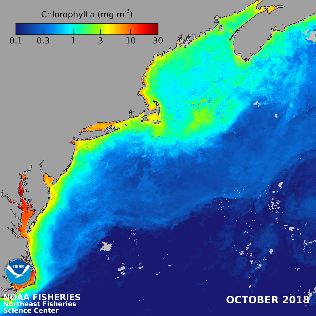 Map from Nova Scotia to Delaware showing chlorophyll a concentrations.  0.1 dark blue to 30 dark red.  Highest concentrations closets to shore.