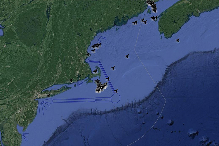 screenshot of interactive right whale sightings map application