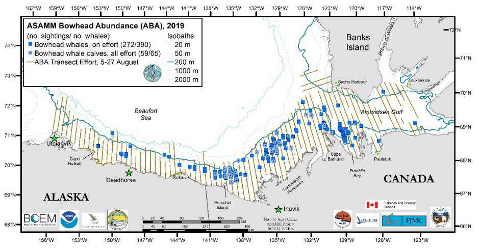 ASAMM Bowhead Abundance (ABA), 2019 (map showing flight transects and Bowhead whale and calf sighting plots in the Beaufort Sea and Amundsen Gulf).