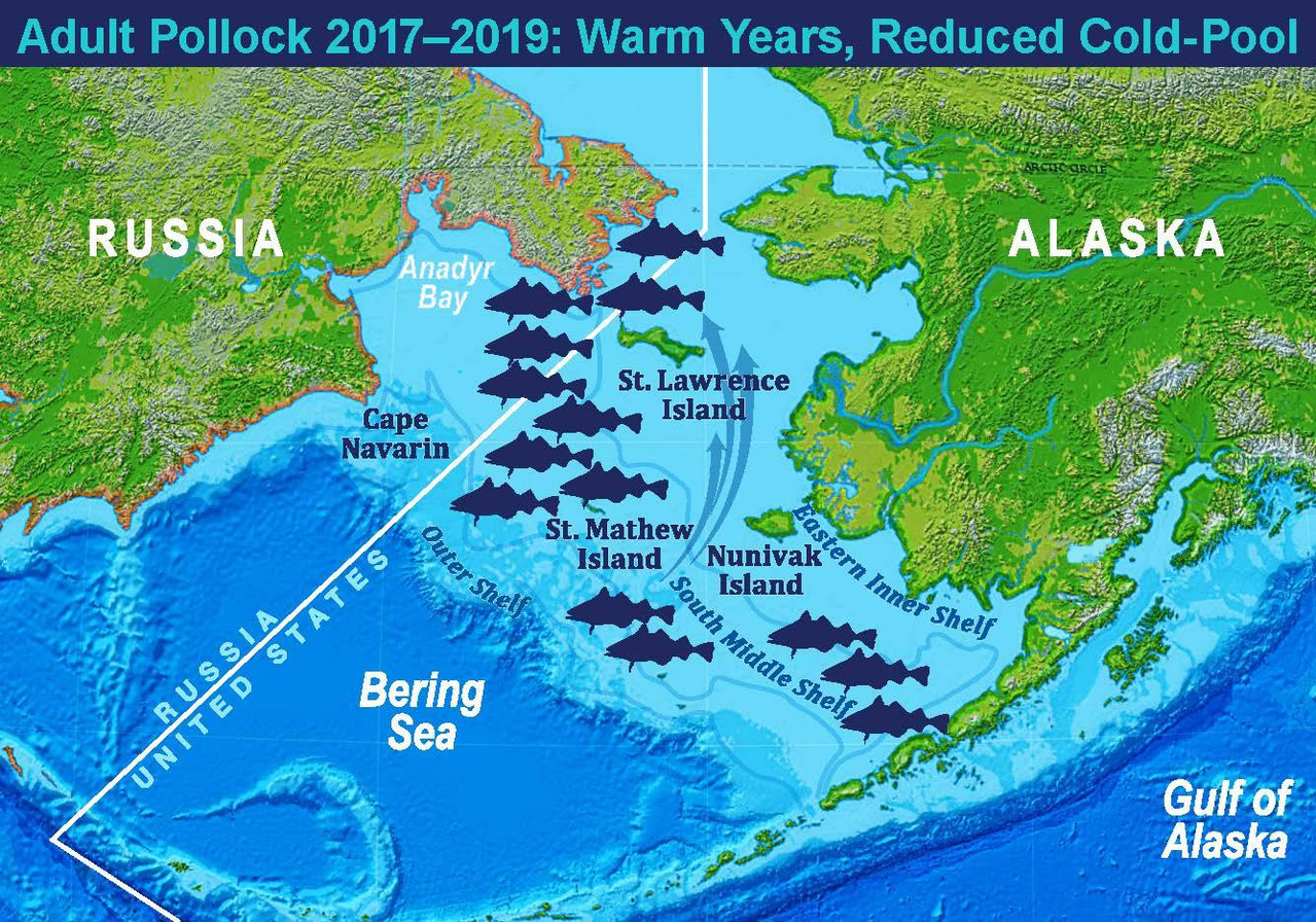 Map showing 2017-2019 approximate pollock distribution and representation of warm years with a reduced cold-pool.