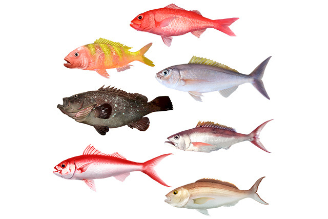 Species illustration for Main Hawaiian Islands Deep 7 bottomfish profile