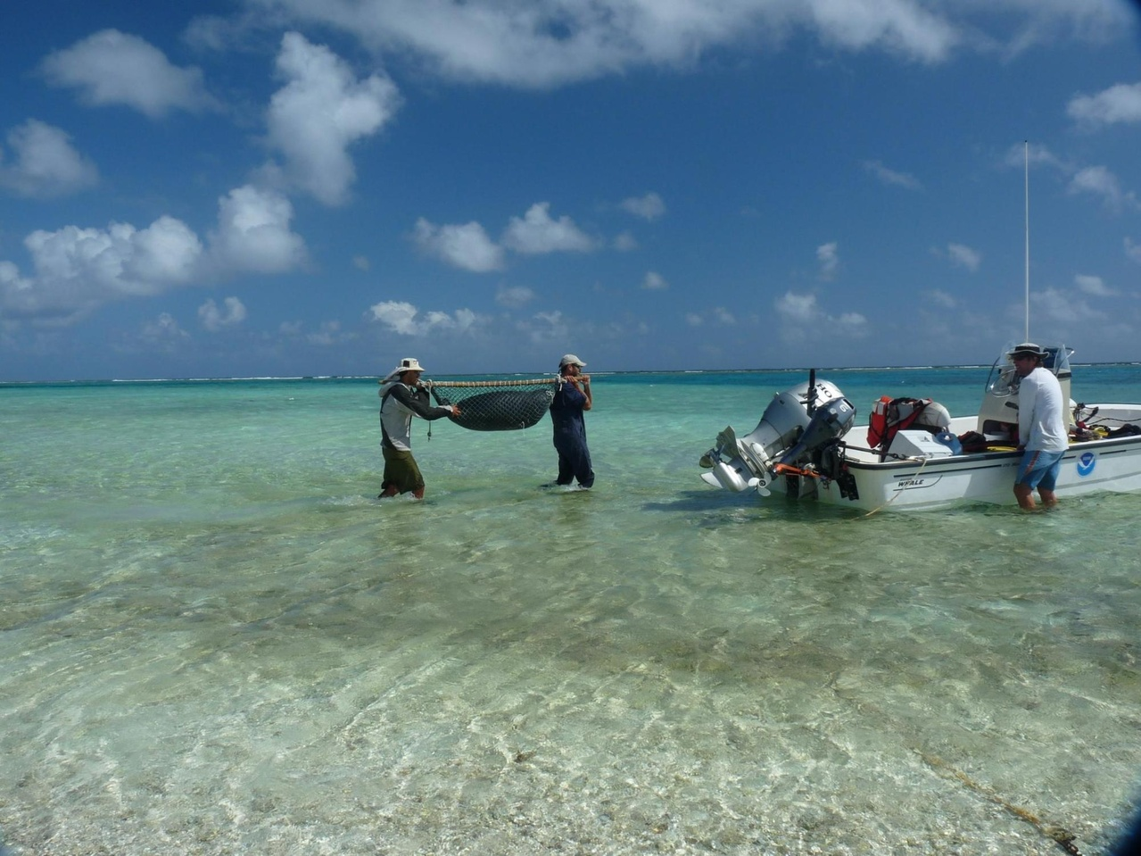 Photograph of researchers carrying a recently weaned pup to an outboard vessel anchored in shallow water.