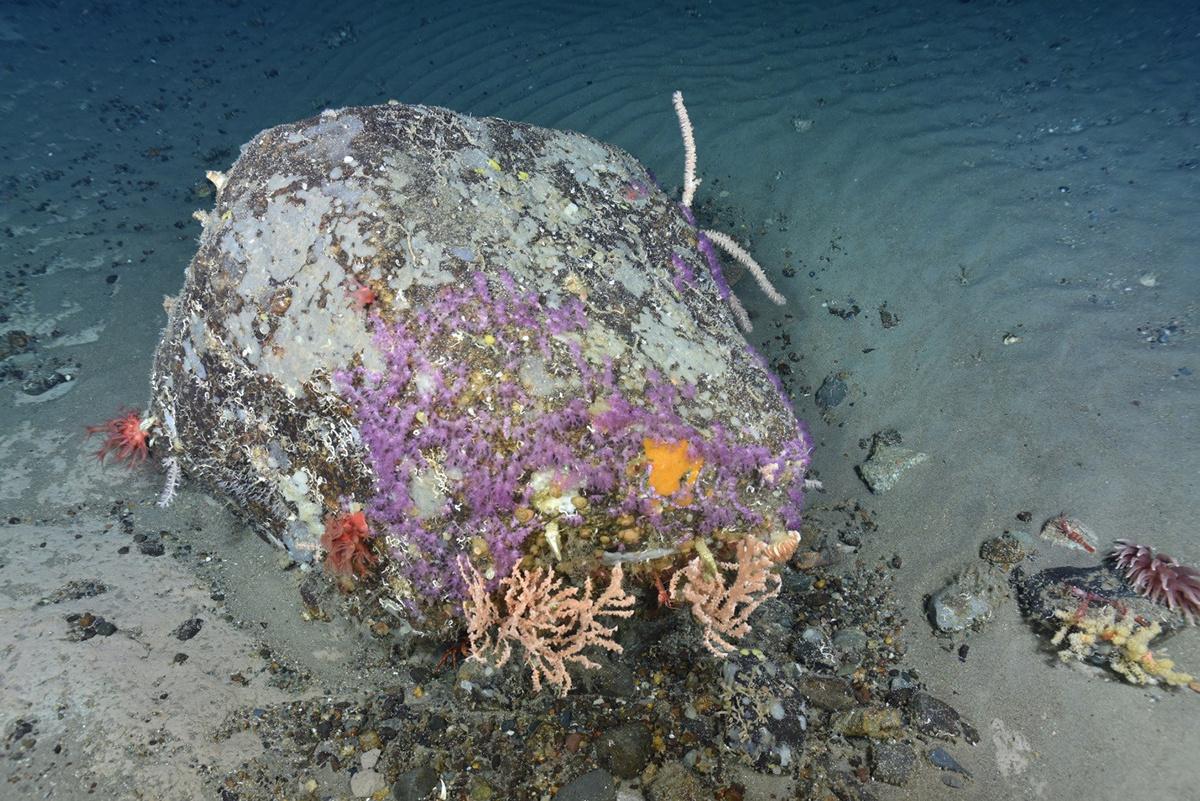 corals-boulder-northeast-channel-12.jpg