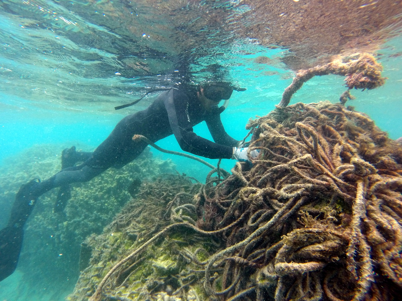 A marine debris diver carefully cuts a derelict fishing net to remove it from the shallow coral reef