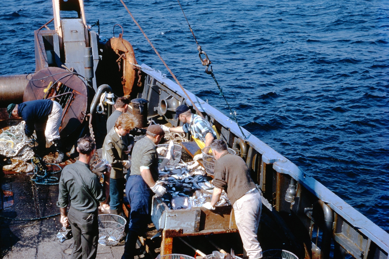 Sorting catch. Credit: NOAA Fisheries/Charlie Barans.