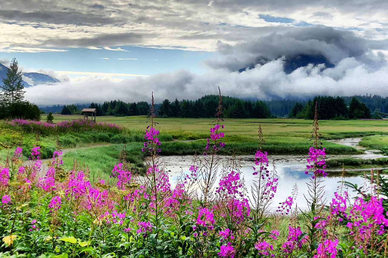 Landscape of a wetland with purple flowers in the foreground and swirling clouds in the background.